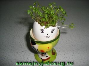 Яйцо №1 – салфетка, кресс-салат