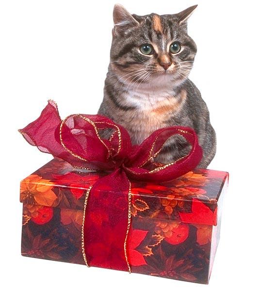 Варианты упаковки подарка своими руками