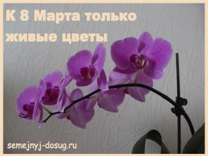 Для милых дам цветы